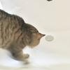 猫が洗面台でうんちをした時の対処法