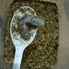 昆虫飼育記 カブトムシ幼虫が冬眠?