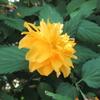 4月20日誕生日の花と花言葉歌句