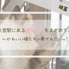大宮駅周辺にある猫カフェをまとめました!【埼玉・大宮】