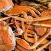 セコガニ・香住蟹の漁期はいつまで?松葉ガニ(ズワイガニ)との大きな違い