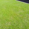 アパート芝庭の雑草 & 珍しい光景・・・