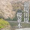 日本さくらの名所100選!岐阜県各務原市の新境川堤の桜並木を撮ってきた