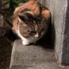 新宿を散歩してると人懐っこい三毛猫に遭遇♪♪