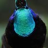 【備忘録】嶋田 忠 野生の瞬間 華麗なる鳥の世界