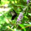 🐝小石川植物園で昆虫を探しました!
