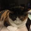 【愛猫日記】毎日アンヌさん#38