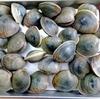 船橋三番瀬ホンビノス貝をお取り寄せしたよ【食べチョク】