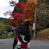 1週間ぶりのお出かけ、宇甘渓へ紅葉狩り(11月11日)