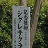 奥海田の植物