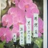 ¹月11日誕生日の花と花言葉