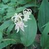 陣馬山~高尾山縦走 『9月 シモバシラの白い花を探しに・・・』