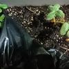【瞑想DE  Q&A】 苺の葉っぱの問題に関する質問