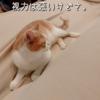 雨田甘夏、即答です。【猫と嗅覚と思いやり事情】