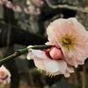 梅の花を見ると春はすぐそこだなと思ふ