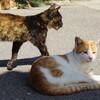 男木島遠征記。瀬戸内海の猫の島へ行ってきた