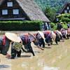 【ポスクロ】ドイツへ田植祭りをご紹介