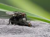 宮丘公園で昆虫撮影。OM-D E-M1 MarkⅡでの手持ち深度合成撮影など