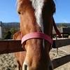 馬の鼻は暖かい大きなグミ