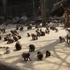 春休み/高崎山自然動物園