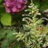 少々の花、待望の幼虫