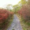 徳仙丈山のツツジは、ここから咲き上がる
