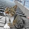 6月後半の #ねこ #cat #猫 その4
