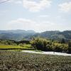 井手製茶園さま、動画撮影。