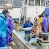 2019年3月29日 小浜漁港 お魚情報