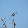 横須賀 しょうぶ園 野鳥を色々撮影@OM-D E-M5