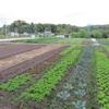 今週の野菜ー農園再開