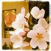 2013年の桜写真をロクに撮れなかった事情