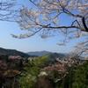 吉野山の桜 咲き始めました