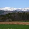 やまびこロードから見る雪が残る白山