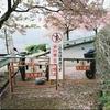 まつだ桜まつりをPortra160で写す