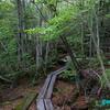 苔と原生林に囲まれた『白駒湖』《#4》 ― 青苔荘から白駒荘へ向かう遊歩道 ―