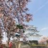 桜盛りの城