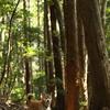 久しぶりの森の公園