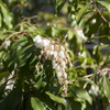 早春の庭から−2(ハーブと花木)