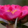 近所の公園の花を D610 と TAMRON 90mm F004 で