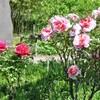 向島百花園の春の花を見る