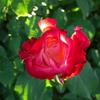楽園のわが庭で過ごす、至福のひととき