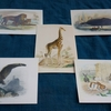 オリジナル・ポストカード新作発売とポストカード・フェア / 全45種展示販売のお知らせ
