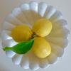 【もぎたてレモン】新潟市でレモン狩り?