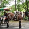 昇仙峡トテ馬車