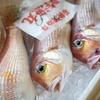 2020年7月29日 小浜漁港 お魚情報