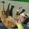 3月前半の #ねこ #cat #猫 どらやきちゃんB