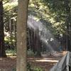 豊里ゆかりの森キャンプ場(茨城県つくば市) キャンプ場レビュー