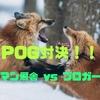 POG 2019-2020シーズン  〜リーマン厩舎 vs ブロガー厩舎  7/7までの結果〜