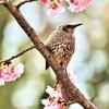 季節の花(令和三年三月)